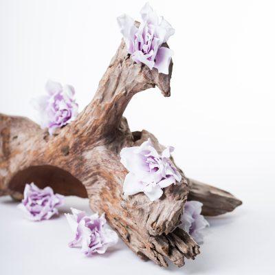 Gardenia Jasminoides - 6 Heads