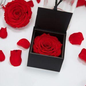 Gift Box XXL