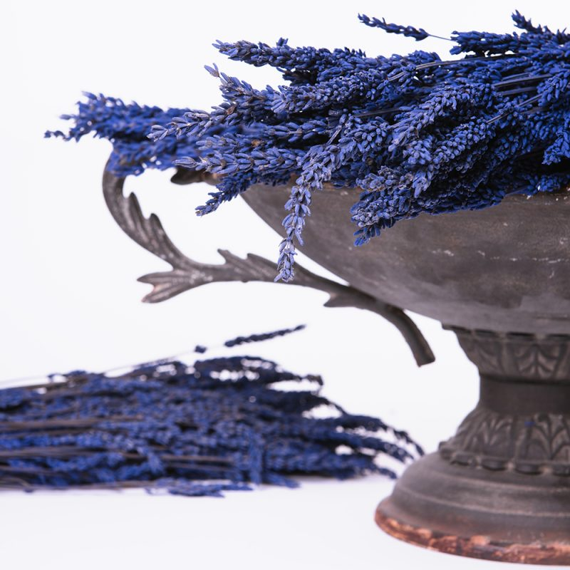 Preserved Lavender