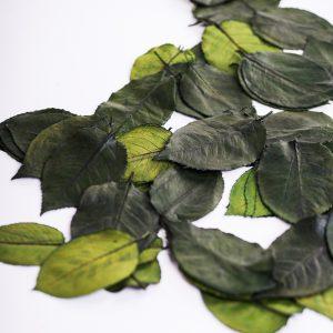 Rose Leaves Green