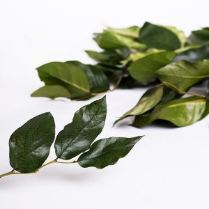 Preserved Salal Wholesale