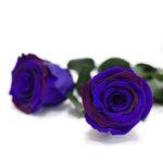 Exclusive (Blue/Purple)