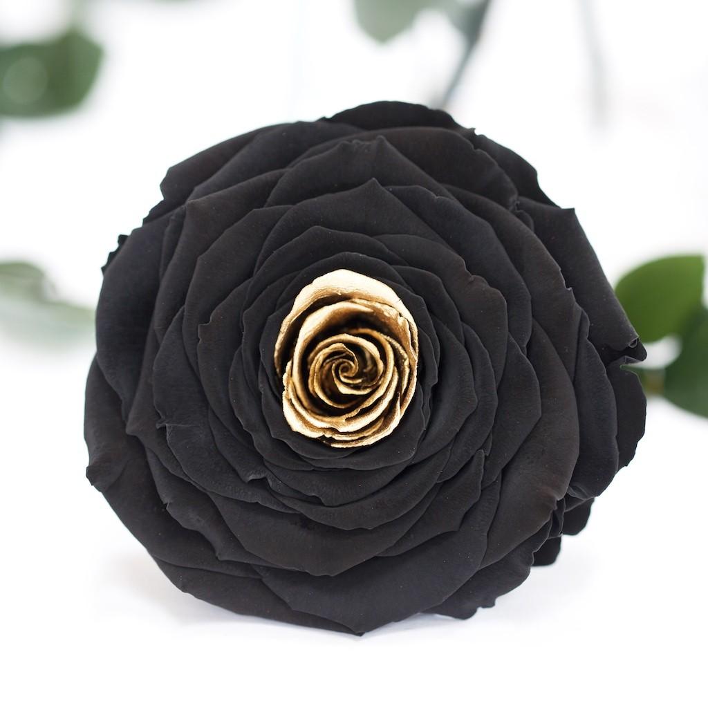 Exclusive (Black/Golden)