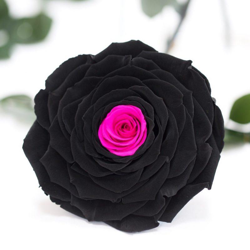 Exclusive (Black/Pink)