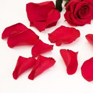Fora's Premium Rose Petals (Window Box) 100 g