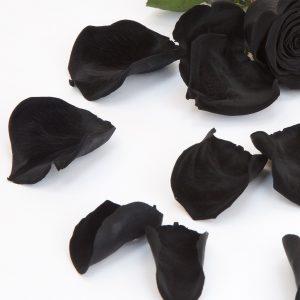 Fora's Premium Rose Petals (Bulk) 1 Ltr