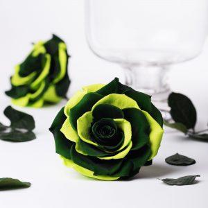Exclusive Bonita (Green)
