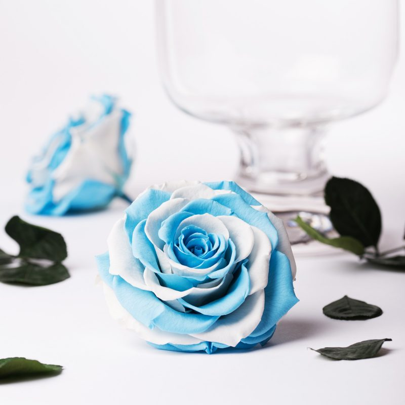 Exclusive blue/white