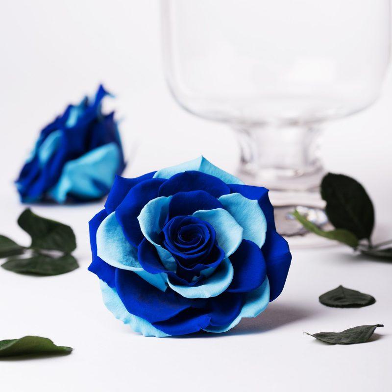 Exclusive blue