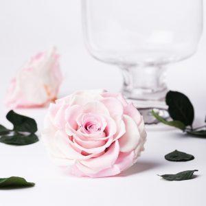 Exclusive Bonita (White/Pink)