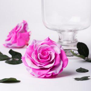 Exclusive Bonita (Pink/Violet)