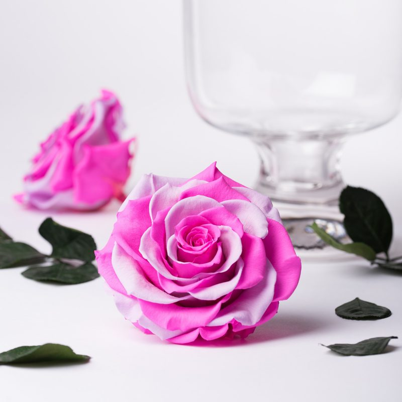 Exclusive pink/violet