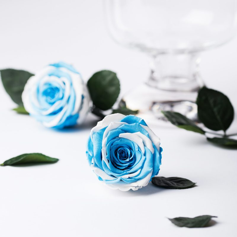 Exclusive (Blue/White)