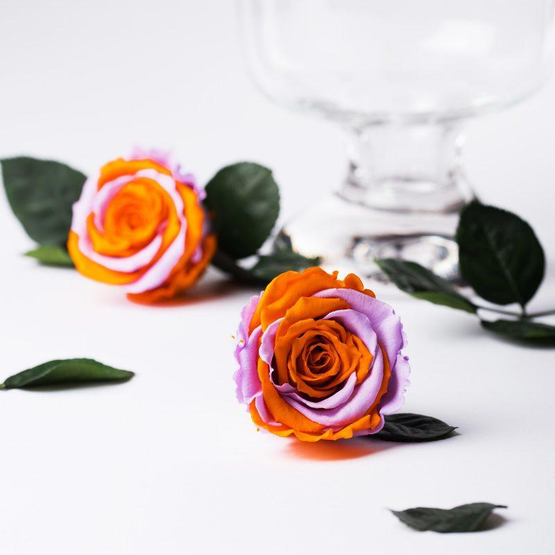 Exclusive (Violet/Orange)