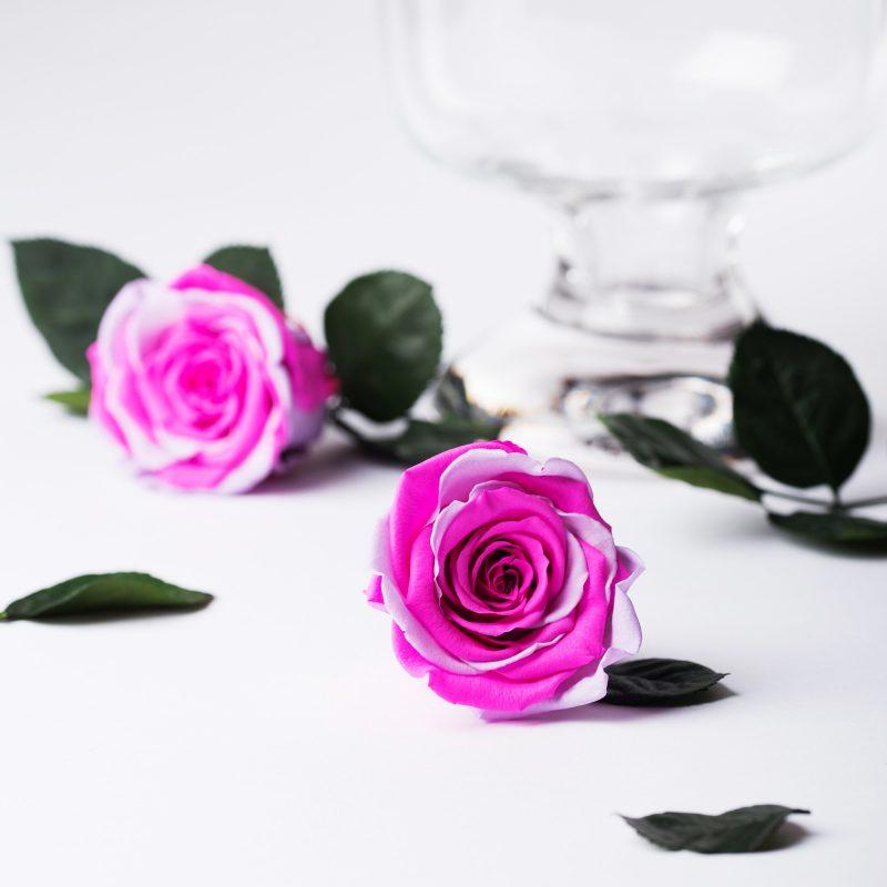 Exclusive (Pink/Violet)