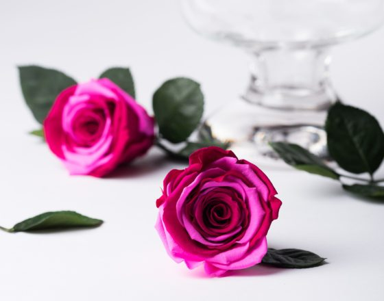 Preserved Flowers Wholesale Buy Preserved Roses Uk Fora Nature