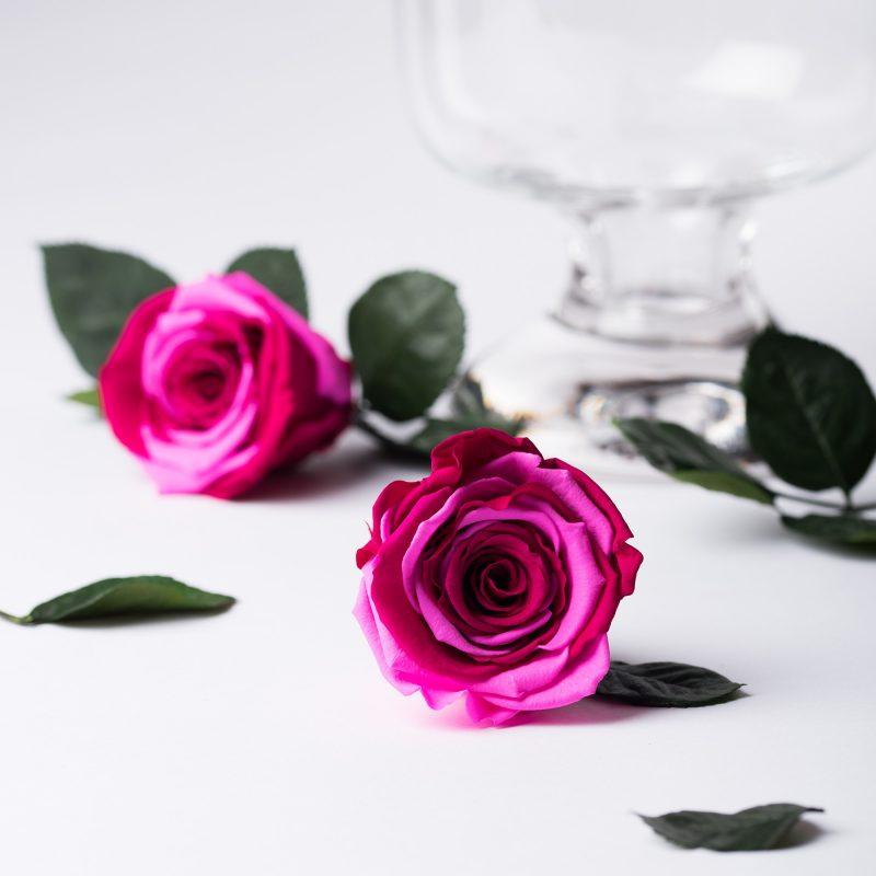 Multi-colour_roses-029