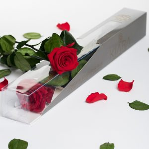 Kiara - Stem with Rose (50cm)