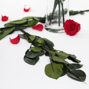 Rose Stem (50cm)