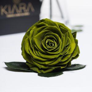 Kiara - Solitario