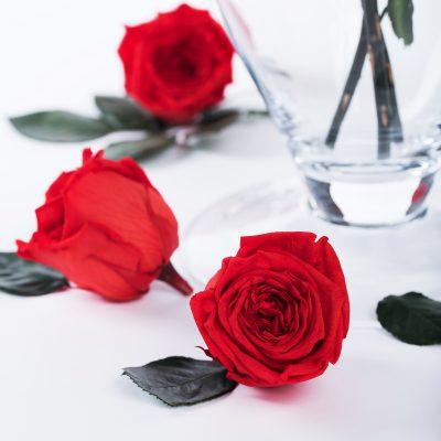 Garden Rose - Camila - Niki -6 Heads