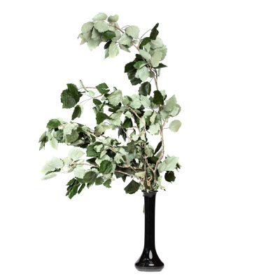 Poplar Green - Bunch