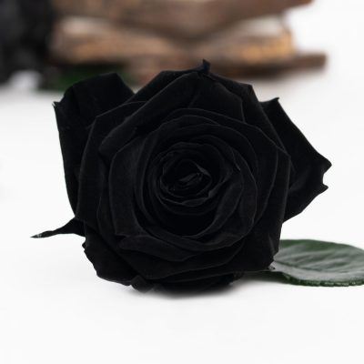 Fora exclusive roses - Medium - 6 Heads - Black