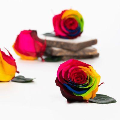 Fora exclusive roses - Medium - 6 Heads - Rainbow