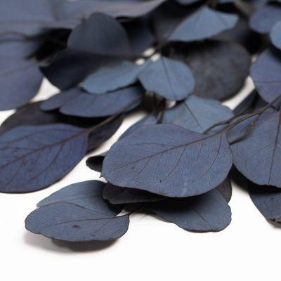 Eucalyptus Poplus - Bunch