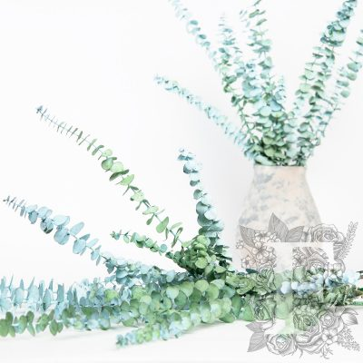 Frosted baby blue Eucalyptus - Bunch