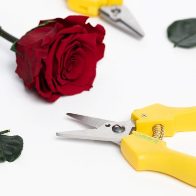 Floral Shears - 1 Pack