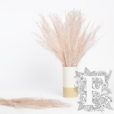 Agrostis - Bunch