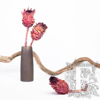Barbigera Flower - Stem
