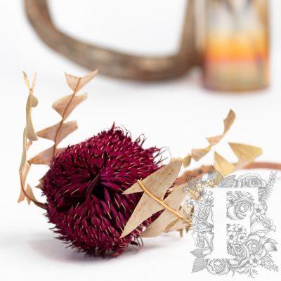 Banksia Baxteri - Stem - Bordeaux
