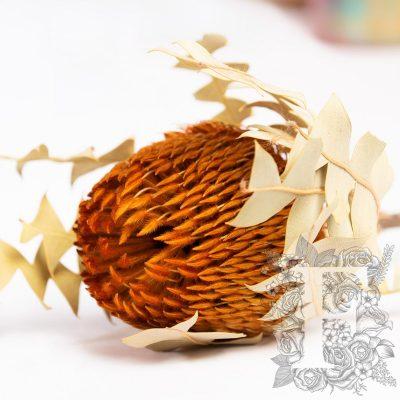 Banksia Baxteri - Stem - Orange