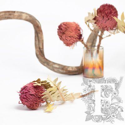 Banksia Baxteri - Stem - Pink