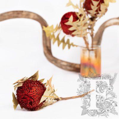 Banksia Baxteri - Stem - Red