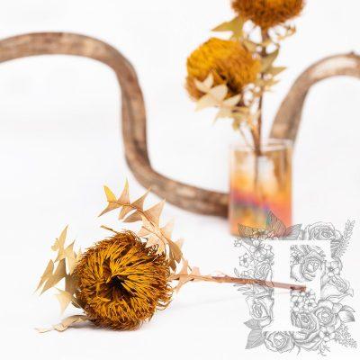 Banksia Baxteri - Stem - Yellow