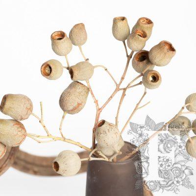 Bellgums - branch - 3 stems