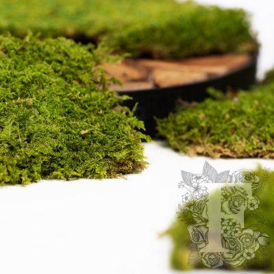 Classic Flat Moss - Bulk - Box 3Kg