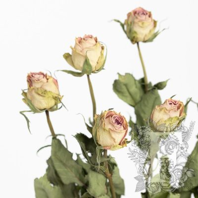 Dried roses - 10 stems- Bunch