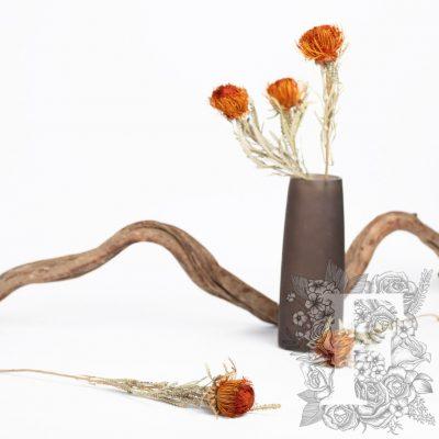 Banksia Dryandra - 3 Stem