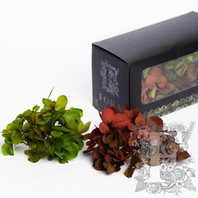 Fora Exclusive Hydrangea - Box