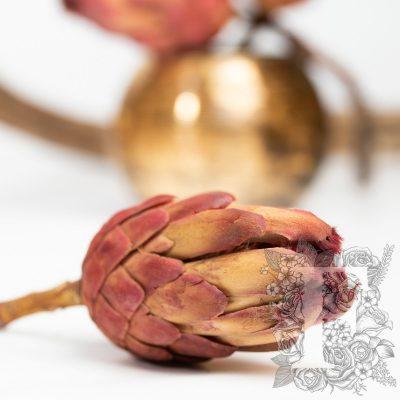 Protea Grandiceps - Stem