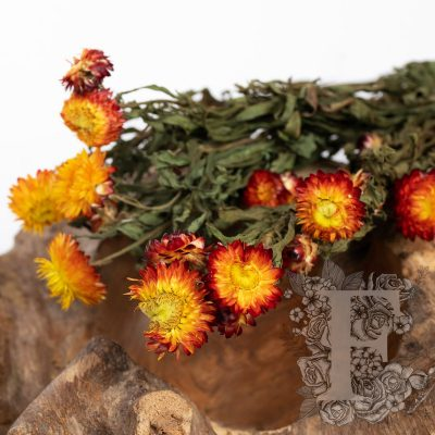 Helichrysum - Bunch