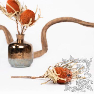 Banksia Hookerana - Stem - Orange