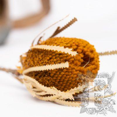 Banksia Hookerana - Stem - Yellow