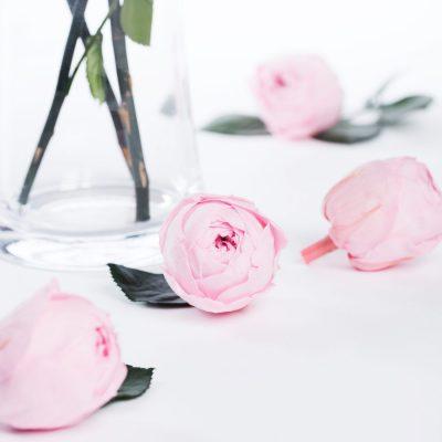 Garden Rose - Peonies - Niki - 6 Heads