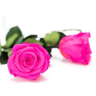 RoseAmor - LL+ Roses - 6 Heads