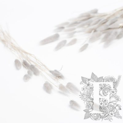 Lagurus Bunny Tail - Bunch 15g